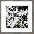 Snow Scene Of Little Bird Perched Framed Print