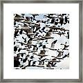 Snows Ross And Aleutians Framed Print