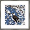 Snowy Bald Eagle Framed Print