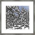 Snowy Dreams  Framed Print