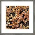 So Many Starfish Framed Print