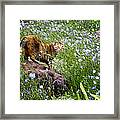Sonoma In The Wildflowers Framed Print