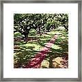 Southern Shadows Framed Print
