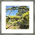 Spanish Moss In Juniper Framed Print