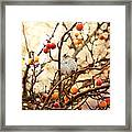 Sparrow In A Crab Apple Tree Framed Print