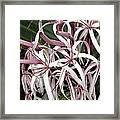 Spider Lily Framed Print