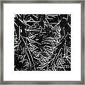 Spikes Of Nature Framed Print