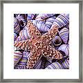 Spiral Shells And Starfish Framed Print