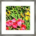 Splash Framed Print by Debbie Sikes