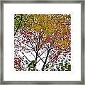 Splash Of Autumn Colors Framed Print