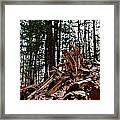 Splintered Hemlock Framed Print