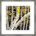 Spring Birch Framed Print