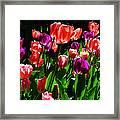 Spring Blossom 5 Framed Print