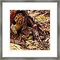 Spring Bounty Morel Mushroom Framed Print