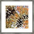 Spring Cones Framed Print