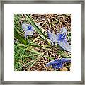 Spring Flowers 2 Framed Print