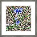 Spring Flowers 3 Framed Print