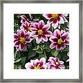 Spring Flowers 4 Framed Print