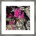 Spring From Rocks Framed Print