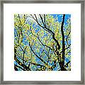 Spring Has Come - Featured 3 Framed Print