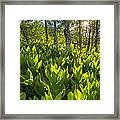 Spring In The Wasatch Framed Print