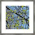 Spring Leaves 2 Framed Print