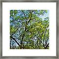 Spring Leaves In The Willows Framed Print