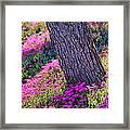 Spring Meadow Framed Print