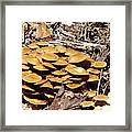 Spring Mushrooms 2 Framed Print