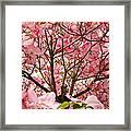 Spring Pink Dogwood Tree Blososms Art Prints Framed Print by Baslee Troutman