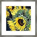 Spring Sunflowers Framed Print