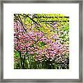 Spring Tree Blossoms Framed Print