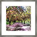 Spring Walkway Lined By Blooming Cherry Trees Framed Print