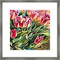 Spring Winds Framed Print