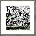 Springtime at Keeneland Framed Print