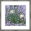 Springtime Beauties Framed Print