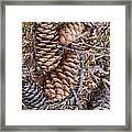 Spruce Cones Framed Print