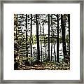 Square North Woods Lake Framed Print