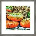 Squatty Orange Pumpkins Framed Print