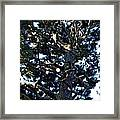 Squiggly Branches Framed Print