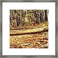 Squirel's View Framed Print