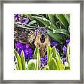 Squirrel In The Botanic Garden Framed Print