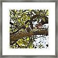 Squirrel On A Branch Framed Print