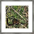 Squirrelcomp 2009 Framed Print