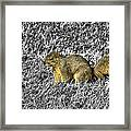 Squirrling Around Looking For Nuts Framed Print