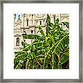 St. Louis Cathedral And Banana Trees New Orleans Framed Print