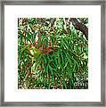 Staghorn Fern Framed Print