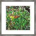 Staghorn Fresco Framed Print