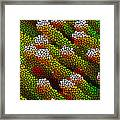 Stained Glass Coral Reef 1 Framed Print by Lanjee Chee