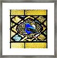 Stained Glass Template Blue Bird Of Happiness Framed Print